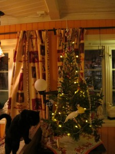 Frøya studerer juletreet jula 2014