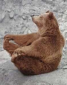 bjørneyoga