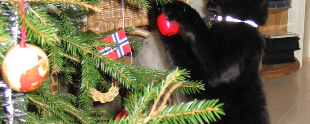 https://ingadalsegg.com/wp-content/uploads/2018/12/Frøya-i-treet.jpg