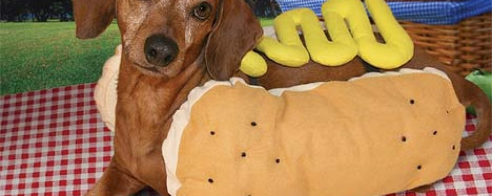 https://ingadalsegg.com/wp-content/uploads/2020/02/which-came-first-the-wiener-or-the-dachshund.jpg